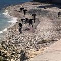 Al mare nonostante il Coronavirus: le immagini dal Lungomare di Molfetta