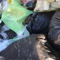 Cane abbandonato, ritrovato tra i rifiuti alla periferia di Molfetta