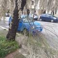 Maltempo o mancata manutenzione? Cedono i rami degli alberi in Via Papa Montini