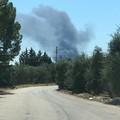 Incendio in un vivaio di Terlizzi. La nube di fumo visibile anche da Molfetta