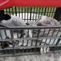 Gabbiani sparati a Molfetta: uno è morto. Agli altri amputate le ali