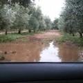 Maltempo, ConfAgricoltura documenta i danni nelle campagne