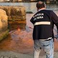 Un'alga tinge di rosso il mare, l'Arpa: «Nessun pericolo per la salute»