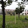 Gli orti urbani di Molfetta tra inclusione e pollice verde. Le immagini