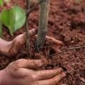 Un albero per ogni nuovo nato. Decisione della Giunta