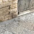 Ancora topi in Via Madonna degli angeli. Nei mesi scorsi l'intervento straordinario del Comune di Molfetta