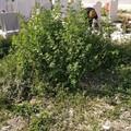 Cimitero di Molfetta, sepolture tra le erbacce?