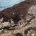 Lungo il litorale alghe e tutto il resto
