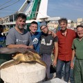"""Due  """"nuove """" tartarughe al Centro di Recupero Tartarughe Marine"""