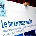 Le attività del Centro di Recupero WWF Molfetta in una mostra su Fregata Maestrale