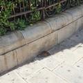 Molfetta, la città dove i topi ormai camminano per strada