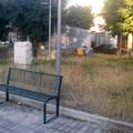 Erbacce e tanto altro nelle aree verdi pubbliche