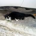 Rifiuti abbandonati e inciviltà, disagio anche per le colonie feline
