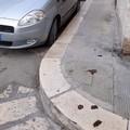 Escrementi di cane per le strade di Molfetta: «Scempio non tollerabile»