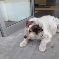 La mascotte di Molfetta in cura: «Rufus ha la broncopolmonite»