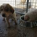 Il presidente dell'ENPA Molfetta: «Tanti cuccioli abbandonati»