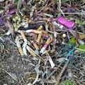 Mozziconi di sigaretta nel parco di Lama Martina: «Dimostriamo di essere civili»