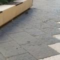 """Molfetta tra i topi, a  """"passeggio """" anche su Corso Umberto. Avvistata anche una biscia"""