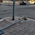 Ancora teppisti per le strade di Molfetta. Divelto un palo in Via Papa Montini