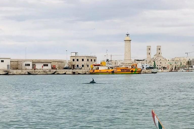 Delfino porto Molfetta foto Liceo Classico da Vinci