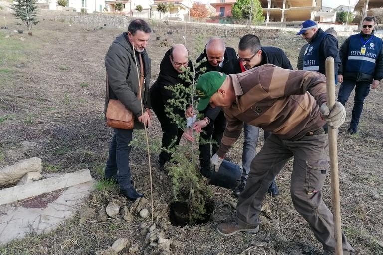 La piantumazione dei 30 alberi in Molise