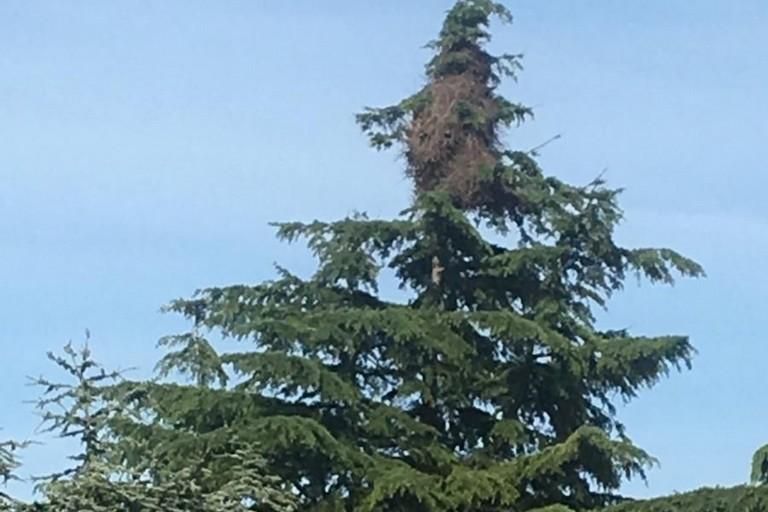 Gli alberi del giardino della scuola Rodari