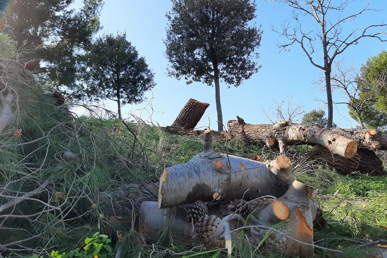 Gli alberi tagliati nel parco di Mezzogiorno