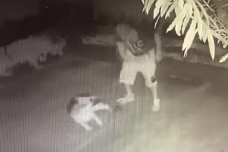 Uomo frusta un cane e il video shock diventa virale