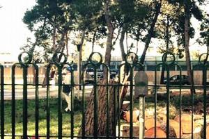 alberi dopo il taglio
