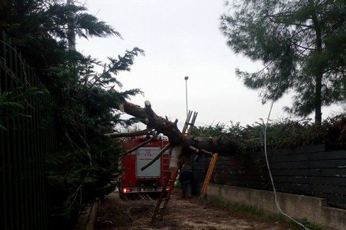 albero abbattuto a molfetta