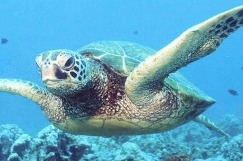 Una tartaruga